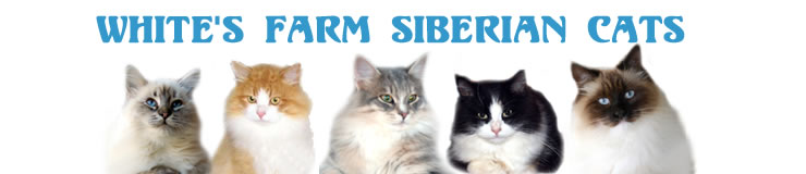 Whites Farm Siberian Cats